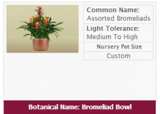 Live Assortment of Bromeliads