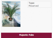 majestic-palm