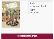 tropical-date-palm