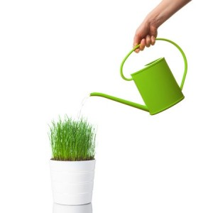 Ways To Keep Your Indoor Plants Alive | Foliage Design Systems New