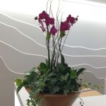 planter bowl with Orchid